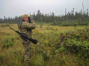 Putting the Swarovski on a Newfoundland bog while looking for moose.