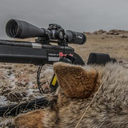 10 Great Coyote Cartridges