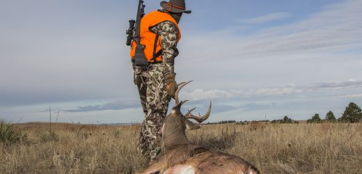 The Hunting Wire – 4 February 2019