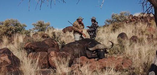 Buffalo Hunting on a Boer War Battleground